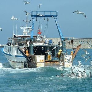 contenu-page-le-cosse-homme-environnement-marin